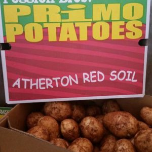 Great All-Rounder Sebago Potato