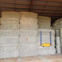Large Square Bales Hay