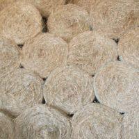 Rhodes Grass Hay – Round Bales