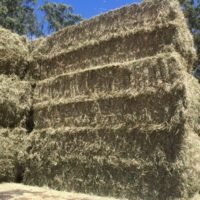 Rhodes Grass Hay – Large Square Bales